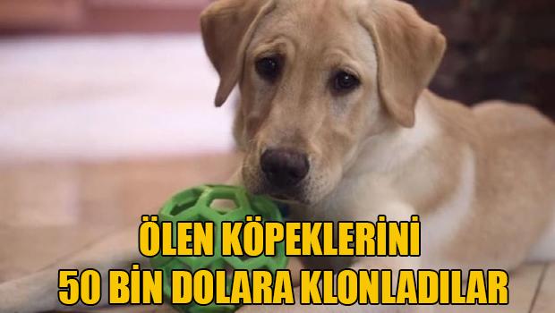 ABD de  yaşayan bir çift, kanserden ölen köpeklerini 50 bin dolara  klonlattı.