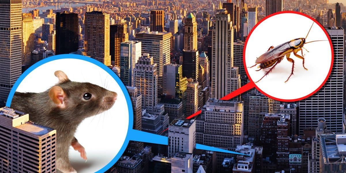 New York'un Gerçek Sahibi Fareler